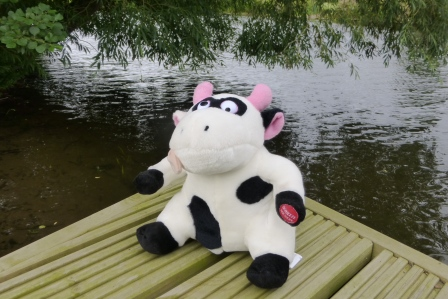 Bell boating team activity Stratford upon Avon Event Cow